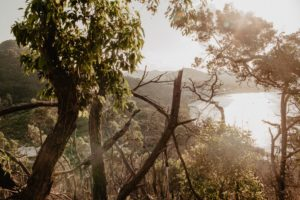 Australian Bush View